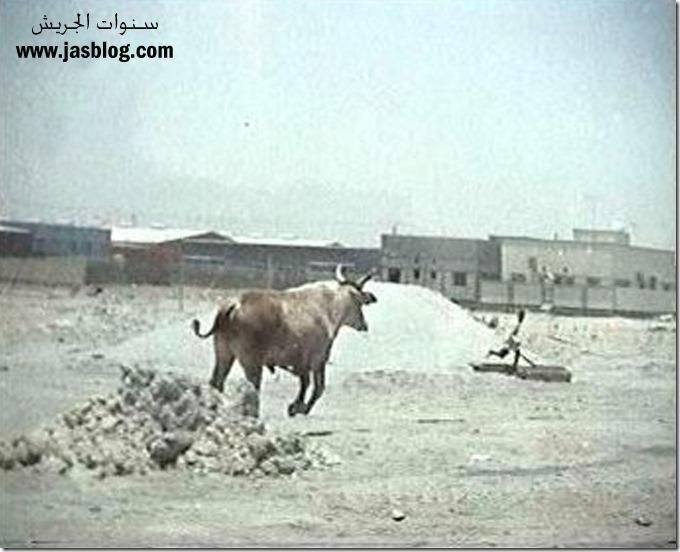 الثور يلحق احد اطفال القرية copy