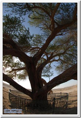 Tree-of-Life-Bahrain-01